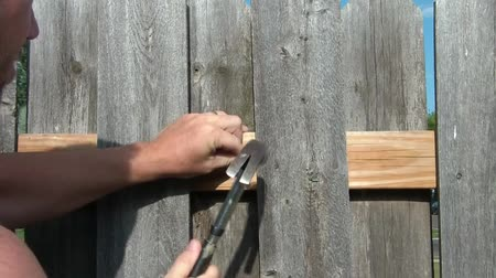 Clip of man in sunlight hammering in large nail into new wood board on fence.