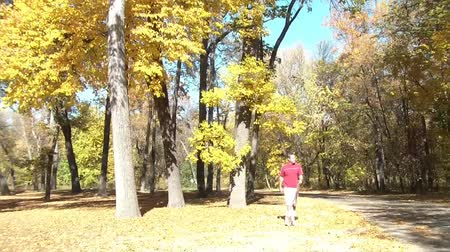 ormanda yaşayan : Autumn clip of man walking small white dog in wooded park with bright yellow tree in background dropping leaves in the sunlight.