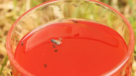 carrion : blowfly laying in red juice
