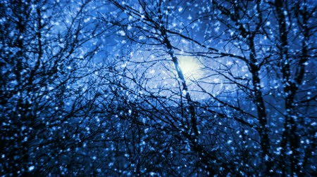 sniezynka : Night snowfall in forest (seamless loop)