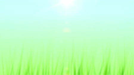 fotoszintézis : Grass Growing Background (24fps). Artificial and stylized blades of grass growing upwards in frame against a soft blue sky background with a lens flare coming from the sun.