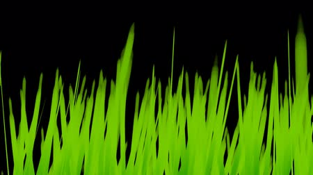sustentável : Grass Growing Background w Alpha (60fps). Artificial and stylized blades of grass growing upwards in frame with an alpha channel for laying over a background of your choice.
