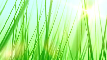 fotoszintézis : Moving Through Grass Background (30fps). Pushing forward through some artificial and stylized blades of grass against a soft blue sky background with a lens flare coming from the sun. Stock mozgókép