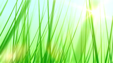 fotoszintézis : Moving Through Grass Background (60fps). Pushing forward through some artificial and stylized blades of grass against a soft blue sky background with a lens flare coming from the sun.