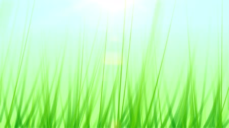 овощи : Pushing Through Grass Background (30fps). Pushing forward through some artificial and stylized blades of grass against a soft blue sky background with a lens flare coming from the sun.