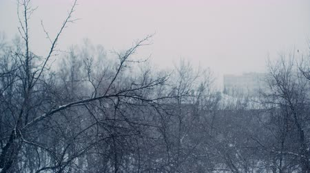 melankoli : Heavy snowfall in the city. Shooting from the window of the house. In the background trees and cityscape