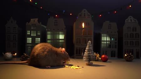 sterrenbeeld : Little domestic rat is eating near Christmas tree in festive background. Close-up of metal rat, symbol of the coming year 2020. Shooting in slow motion. Stockvideo