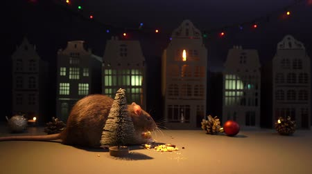 открытка : Adorable domestic rat is eating near Christmas tree in festive background. Close-up of metal rat, symbol of the coming year 2020. Shooting in slow motion.