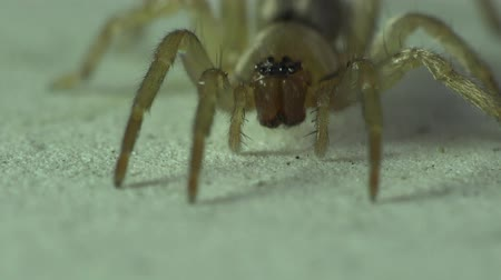 cross spider : Video Spider 4K