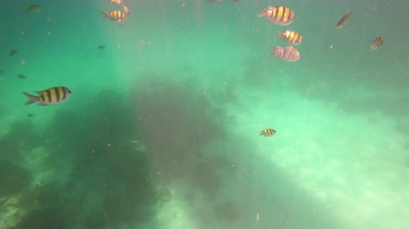 şnorkel : Underwater andaman sea with fish at Phuket, Thailand Stok Video