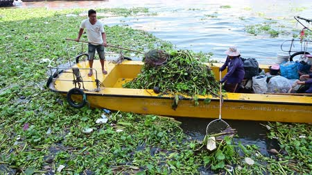 sümbül : Bangkok, Thailand - December 25, 2018 : Unidentified officer removing water hyacinth in river Stok Video
