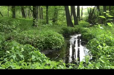 cisza : stream in the forest