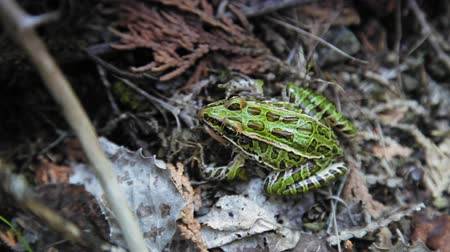 toad : Close-up of a frog in a forest, Tobermory, Ontario, Canada