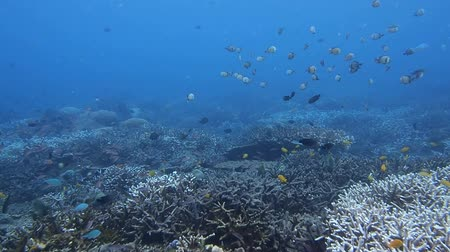 barriers : coral reef