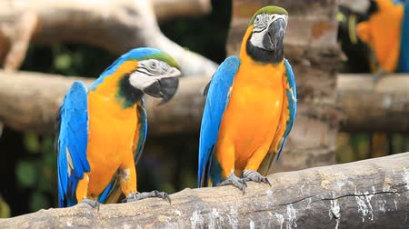 любовь : Love macaw birds