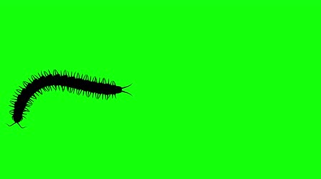 obnoxious : Centipede on green screen, CG animated silhouette, seamless loop