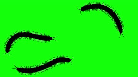obnoxious : Three centipedes on green screen, CG animated silhouettes, seamless loop Stock Footage