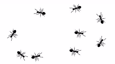 úponka : Swarm of ants, CG animated silhouettes on white, seamless loop