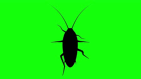 obnoxious : Fixed Cockroach on green screen, CG animated silhouette, looping
