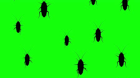 obnoxious : Cockroaches running up on a green screen. Seamless loop 3d animation of black silhouettes of insects on chroma key.