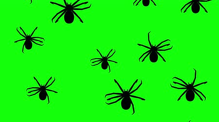 fobi : Spiders running up on a green screen. Seamless loop 3d animation of black silhouettes of arthropods on chroma key. Stok Video