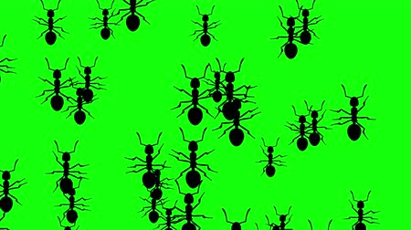 úponka : Invasion of hordes of ants. Crowd of creepy insects runs on green chroma key, black silhouettes fill the screen and turn into a black backdrop, 3D animation.
