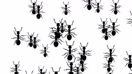 úponka : Invasion of hordes of ants. Crowd of creepy insects runs on a white background, black silhouettes fill the screen and turn into a black backdrop, 3D animation. Dostupné videozáznamy