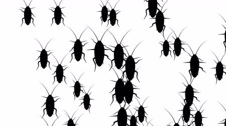 obnoxious : Invasion of hordes of cockroaches. Crowd of creepy insects runs on a white background, black silhouettes fill the screen and turn into a black backdrop, 3D animation. Stock Footage