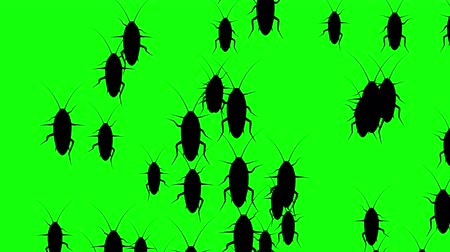 fobi : Invasion of hordes of cockroaches. Crowd of creepy insects runs on green chroma key, black silhouettes fill the screen and turn into a black backdrop, 3D animation.