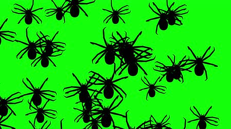arachnophobia : Invasion of hordes of spiders. Crowd of creepy arthropods runs on green chroma key, black silhouettes fill the screen and turn into a black backdrop, 3D animation.
