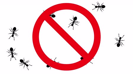 haşarat : Ants in prohibition sign. Black silhouettes of pests swarm on white background, 3D animation.