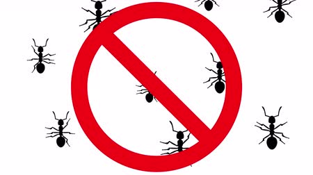 fobi : Ants in prohibition sign. Black silhouettes of pests creep up on white background. Seamless loop 3D animation. Stok Video