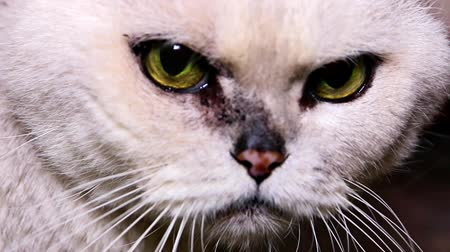 bichano : aggressive behavior of the old sick cat