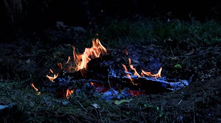 ignite : flames of a forest fire Stock Footage