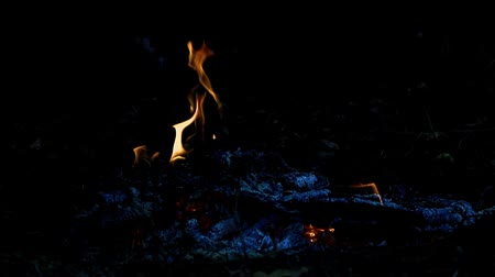 tutuşturmak : flames of a forest fire Stok Video