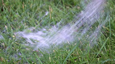 refreshing : watering the lawn
