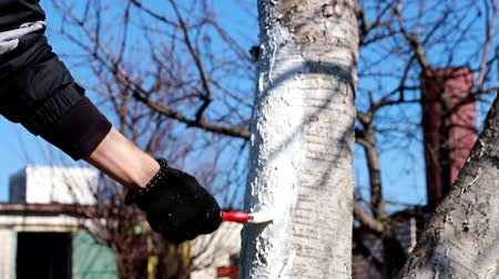 vintage : painting a tree trunk