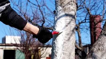 resistant : painting a tree trunk