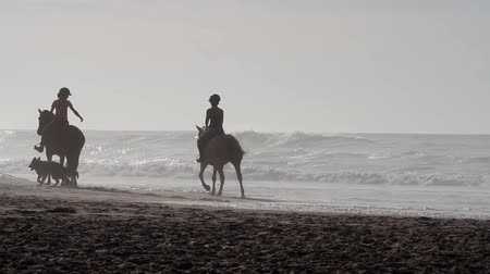 curto : Horses, people and dogs on the beach during the sunrise