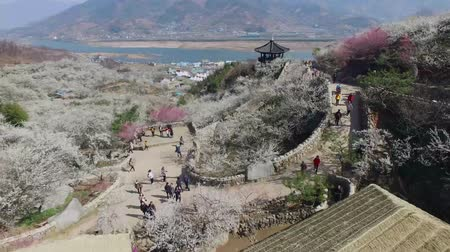 huai : Gwangyang Maewha Plum Flower Festival, Jeonllanamdo, South Korea, Asia when Mar-23-2018