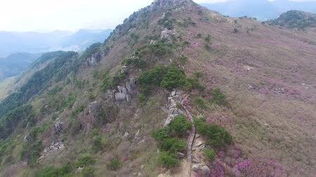 het weer : Jandalle Azalea Blossom Blooming in Daegyeon Peak in Biseul Mountain, Daegu, Gyeongsanbukdo, Zuid-Korea, Azië wanneer 26 april-2018
