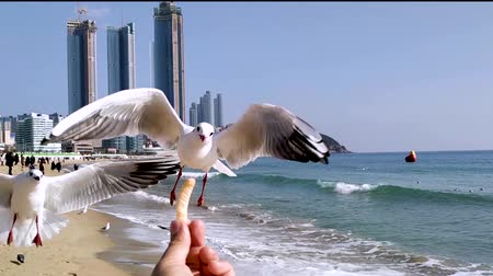 snatching : The seagull trying to eat a Saeukkang snack , Haeundae Beach, Busan, South Korea