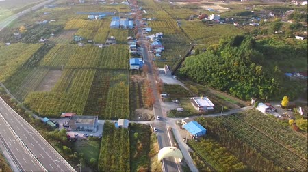 шедевр : Aerial View of Pear Farm Street in Hadong, Gyeongnam, South Korea, Asia
