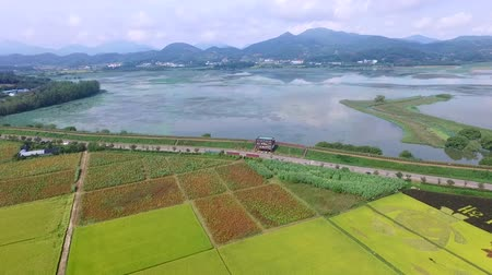 exkursion : Aerial View of Cosmos Road and Rice Paddy Painting in Mujeom village, Changwon, Gyeongnam, South Korea, Asia Videos