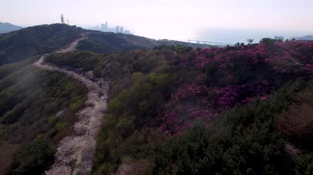 Spring Flowers Blooming in Hwangryeongsan Mountain, Busan, South Korea, Asia.