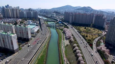 Aerial View of Cherry Blossoms Blooming in Suyeonggang River, Busan, Korea.