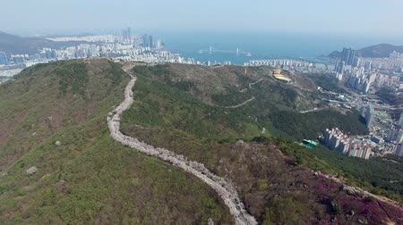 observatory : Aerial View of Cherry Blossoms Blooming in Geumryeonsan Mountain, Busan, South Korea, Asia.