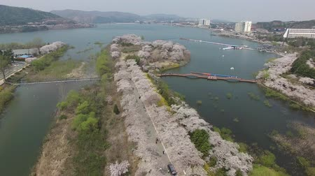 Aerial View of Cherry Blossoms Blooming in Bomun Park, Gyeongju, South Korea, Asia.