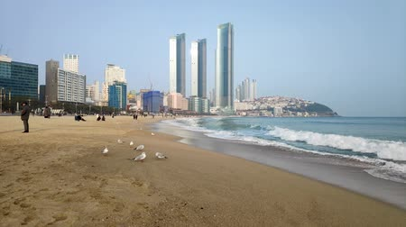 набережная : Seagulls in Haeundae Beach, Busan, South Korea Asia.