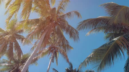 остров : Bottom view of coconut palm trees forest in sunshine. Palm trees against a beautiful blue sky. Green palm trees on blue sky background. Travel concept. Стоковые видеозаписи